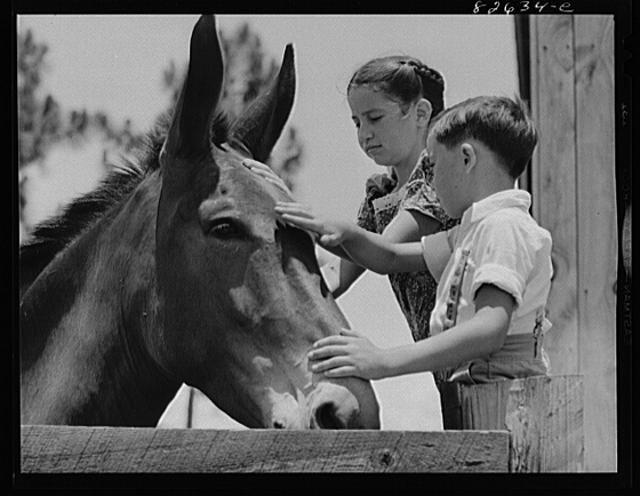 1942 image of Johnny and Kitty McLelland with a mule.