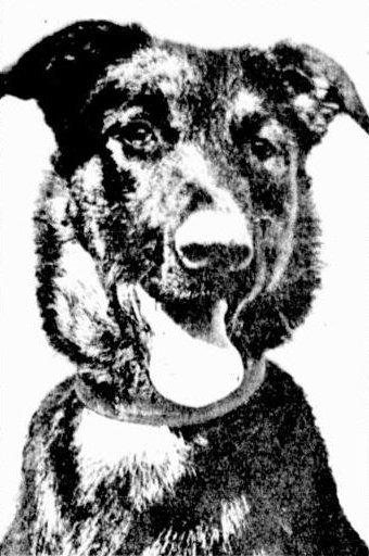 Idaho the dog on trial.