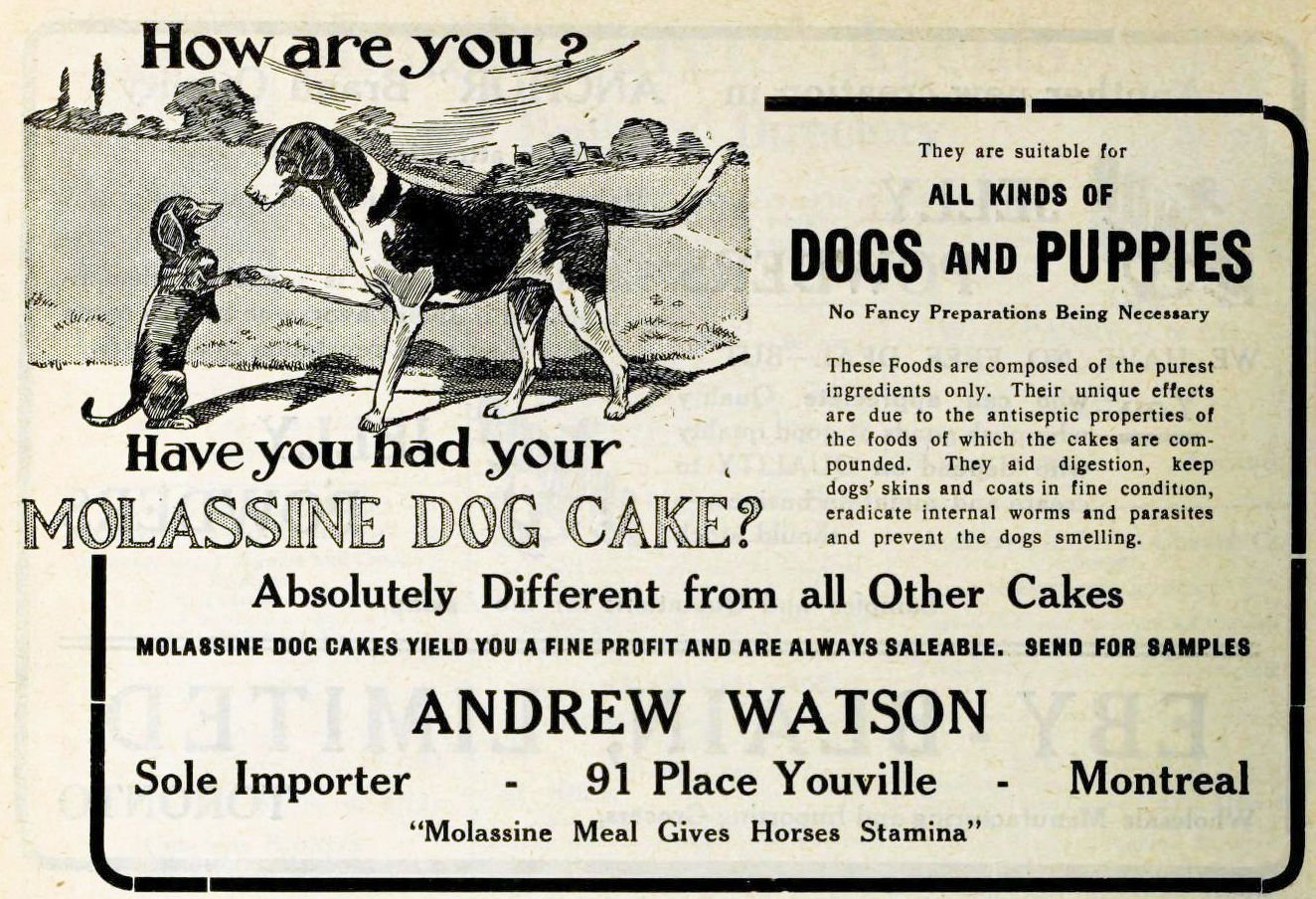 dog food Archives - Useless Information