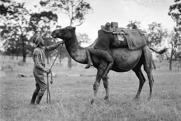 Soldiers training with a camel.