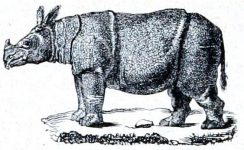 1850 Sketch of a Rhinoceros