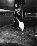 John Hallstrom, Australian philanthropist and head of Sydney Zoo, is accompanying the albino kangaroo, a gift for President Truman, during its long trip by air.