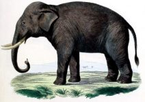 1774 painting of an elephant.